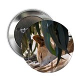 "Dingo 2.25"" Button (10 pack)"