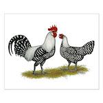 Brakel Chickens Small Poster