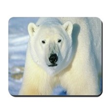 Pappa bear Mousepad