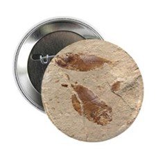 "Fish Fossil 2.25"" Button (100 pack)"