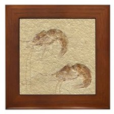 Pair of Fossilized Shrimp Framed Tile