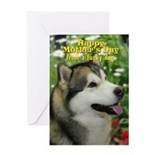 Malamute Mother's Day Card