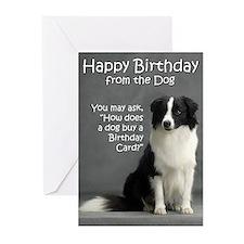 Border Collie Birthday Cards (Pk of 10)