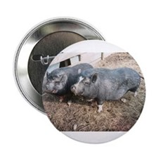 """Cute Pigs 2.25"""" Button (10 pack)"""
