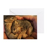 Baby Squirrels Card