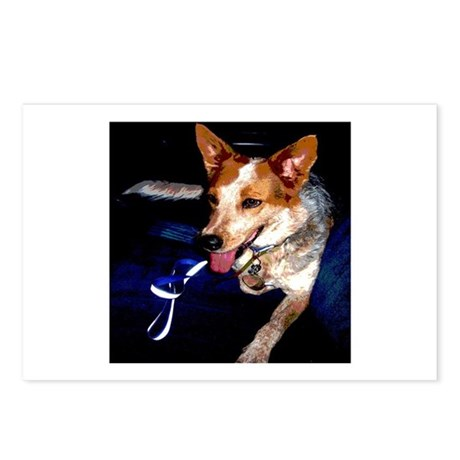 Red Heeler Postcards (Package of 8)