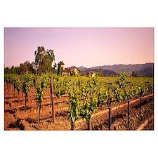 Sattui Winery St Helena CA