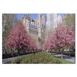 Cherry Trees Battery Park New York City NY