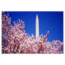 Washington Monument Washington DC