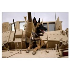 A military working dog sits on a US Army M2A3 Brad