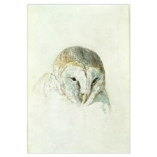 White Barn Owl, from The Farnley Book of Birds, c.