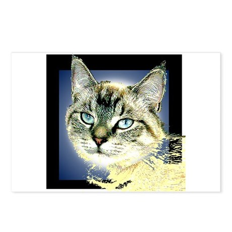 Blue Eyed Kitten Postcards (Package of 8)