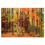 Autumn trees in a forest, Chestnut Ridge Park, New