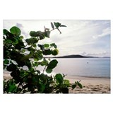 US Virgin Islands, St. John, Gibney's Beach, Seagr