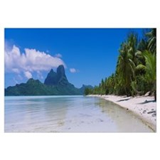 Palm trees on the beach, Bora Bora, French Polynes