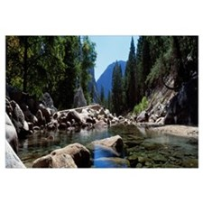 Mountain behind pine trees, Tenaya Creek, Yosemite