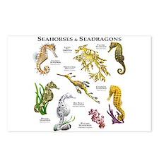 Seahorses & Seadragons Postcards (Package of 8)