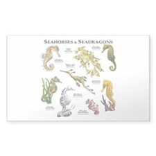 Seahorses & Seadragons Decal