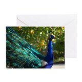 Peacock 5560 - Greeting Card