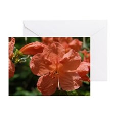 Stunning Display Greeting Cards (Pk of 10)