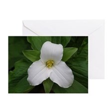 Wildflower Greeting Cards (Pk of 10)