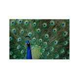 Peacock 5427 - Rectangle Magnet