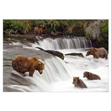 Grizzly bears fish at Brooks Falls in Katmai Natio
