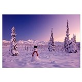 Snowman at sunset, snow covered spruce trees, Chug