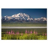 Mt. McKinley and the Alaska Range with fireweed fl