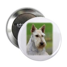 "Scottish Terrier AA063D-101 2.25"" Button (100 pack"