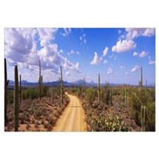 Arizona, Saguaro National Park, road