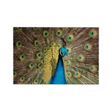Peacock 6286 - Rectangle Magnet (100 pack)