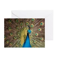 Peacock 6286 - Greeting Cards (Pk of 20)