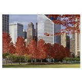Illinois, Chicago, Millennium Park, Trees in a par