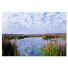 Montezuma National Wildlife Refuge Finger Lakes NY