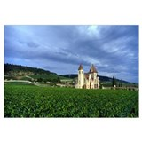 France, Burgundy, Grand Cru Vineyard