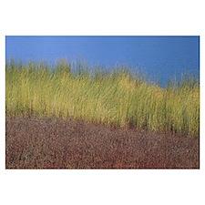 Reeds along a lake, California