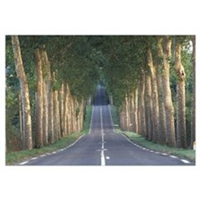 Road w/Trees France