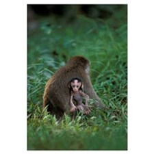 Mother and Child Macaque