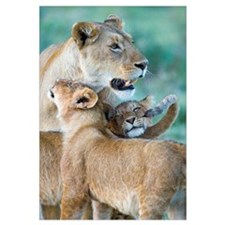 Close-up of a lioness and her two cubs, Ngorongoro