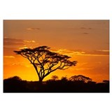 Silhouette of trees in a field, Ngorongoro Conserv