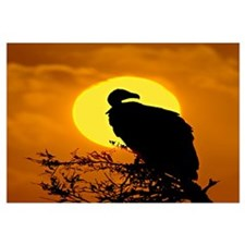 Silhouette of a vulture perching on a branch, Masa