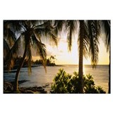 Palm trees on the coast, Kohala Coast, Big Island,