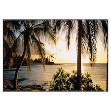 Palm trees on the coast, Kohala Coast, Big Island,