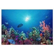 School of fish swimming near a reef, Indo-Pacific