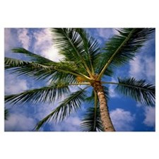 Low-angle view of palm tree fronds, white clouds i