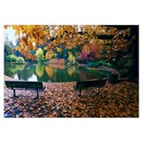 Autumn color trees and fallen leaves along pond, e