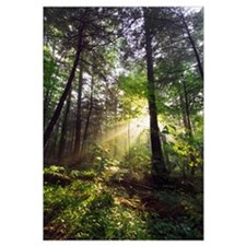 Sunbeams in dense forest, Great Smoky Mountains Na