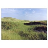 Grass in a field, Whitetail Creek, Keith County, N