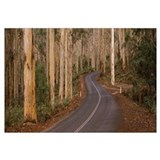 Road passing through a forest, Caves Road, Boranup